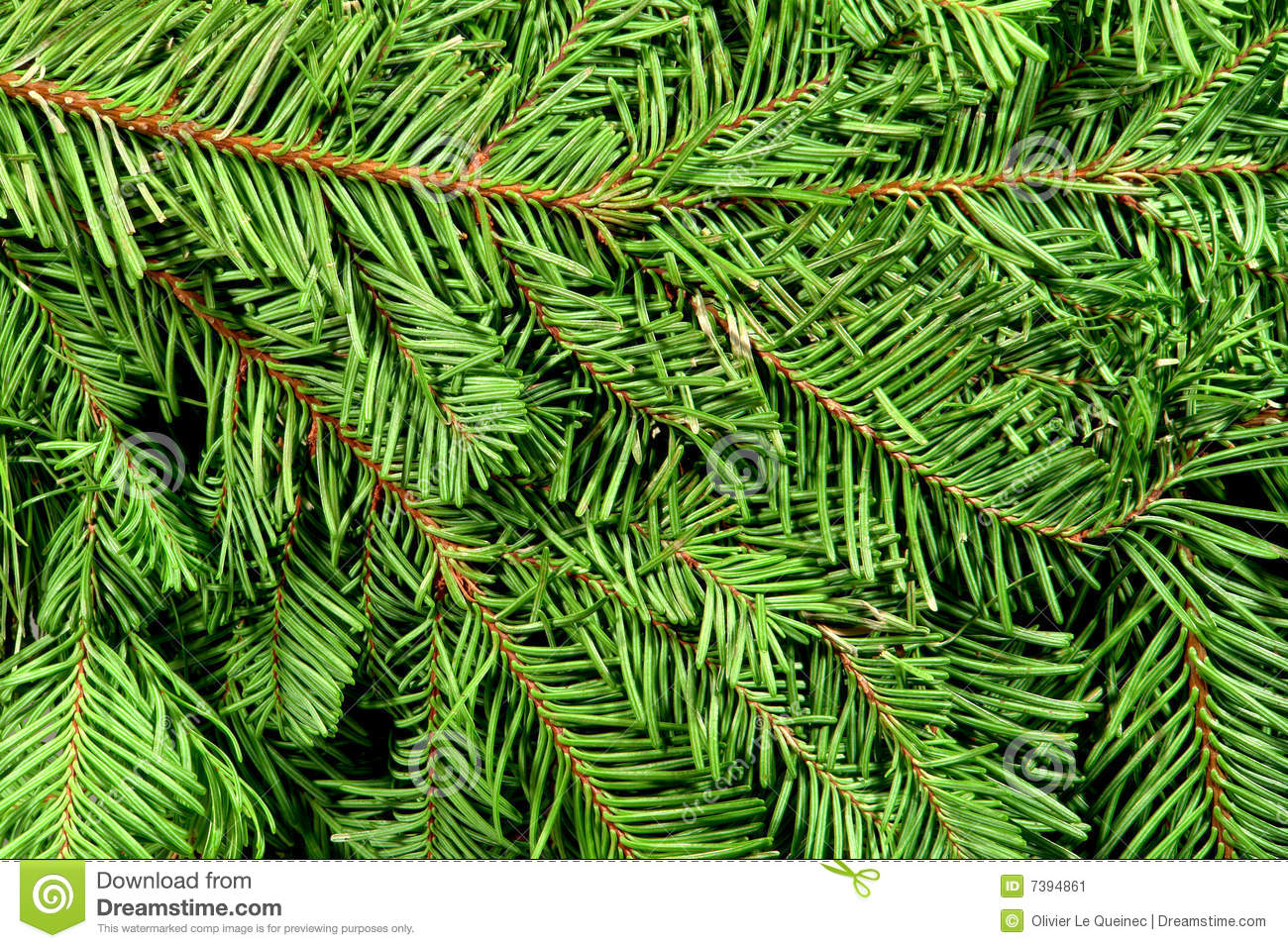 Christmas Tree Branches Green Background Stock Image ...