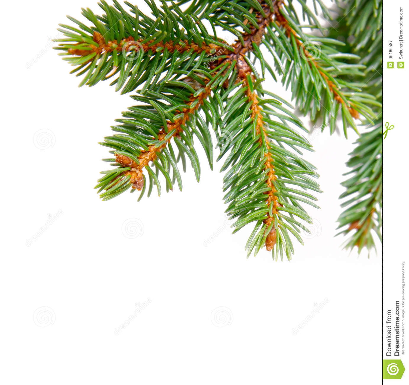 Christmas Decorations With Tree Branches: Christmas Tree Branches And Decorations Isolated Stock