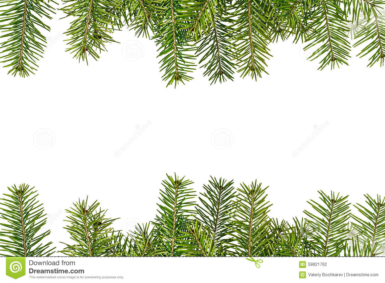 download christmas tree branches isolated on white background stock photo image of evergreen nature - Christmas Tree Branches
