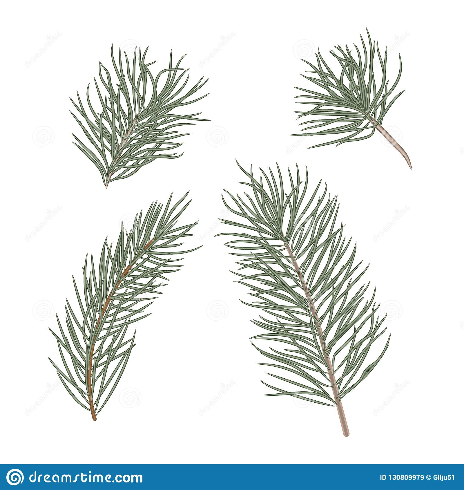 Christmas Tree Branches Set For Christmas Decor Branches Close Up Collection Of Pine Branches Vector Set Of Christmas Graphic Stock Vector Illustration Of Cedar Evergreen 130809979