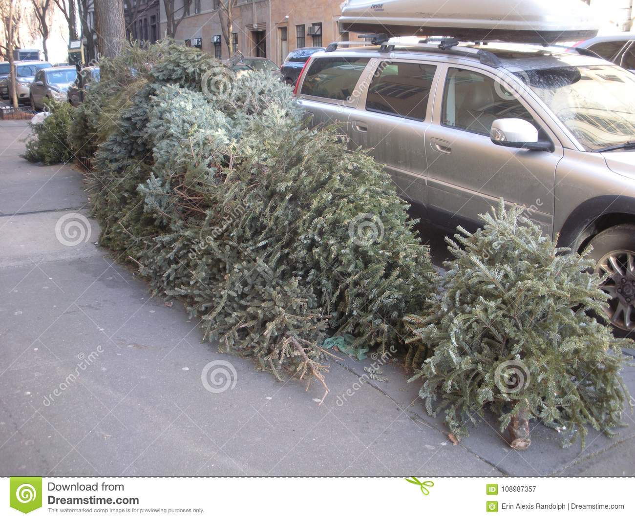 Christmas Tree Disposal, Upper West Side, NYC, NY, USA Editorial ...