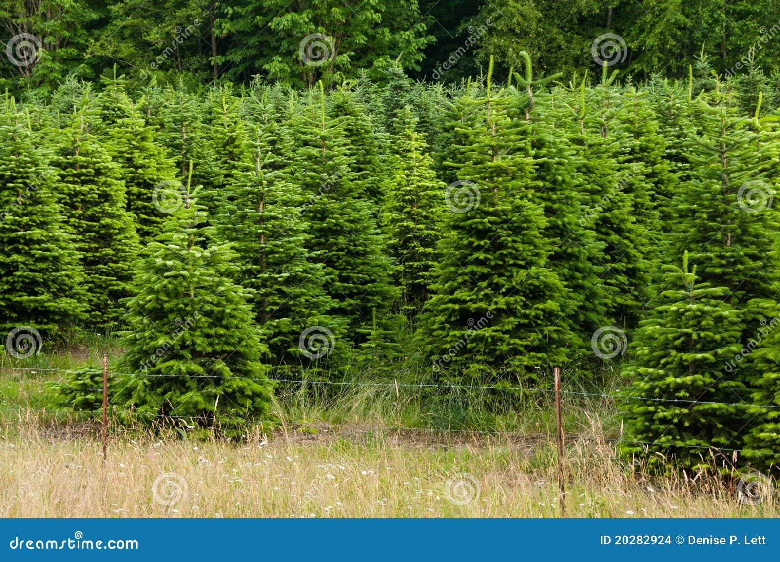 Christmas Tree Farm Michigan
