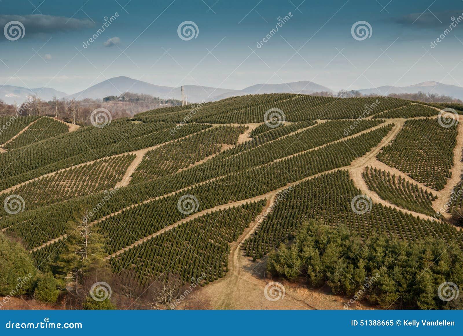 Christmas Tree Farm In Western North Carolina Stock Photo ...