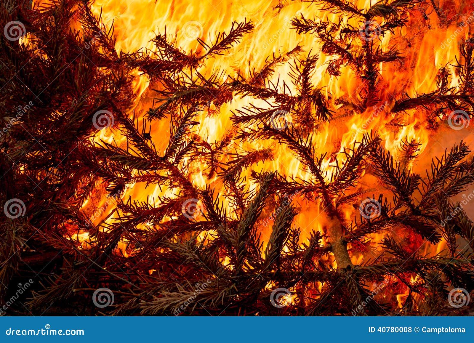 Burning Christmas Tree.Christmas Tree Flaming Burning Stock Photo Image Of