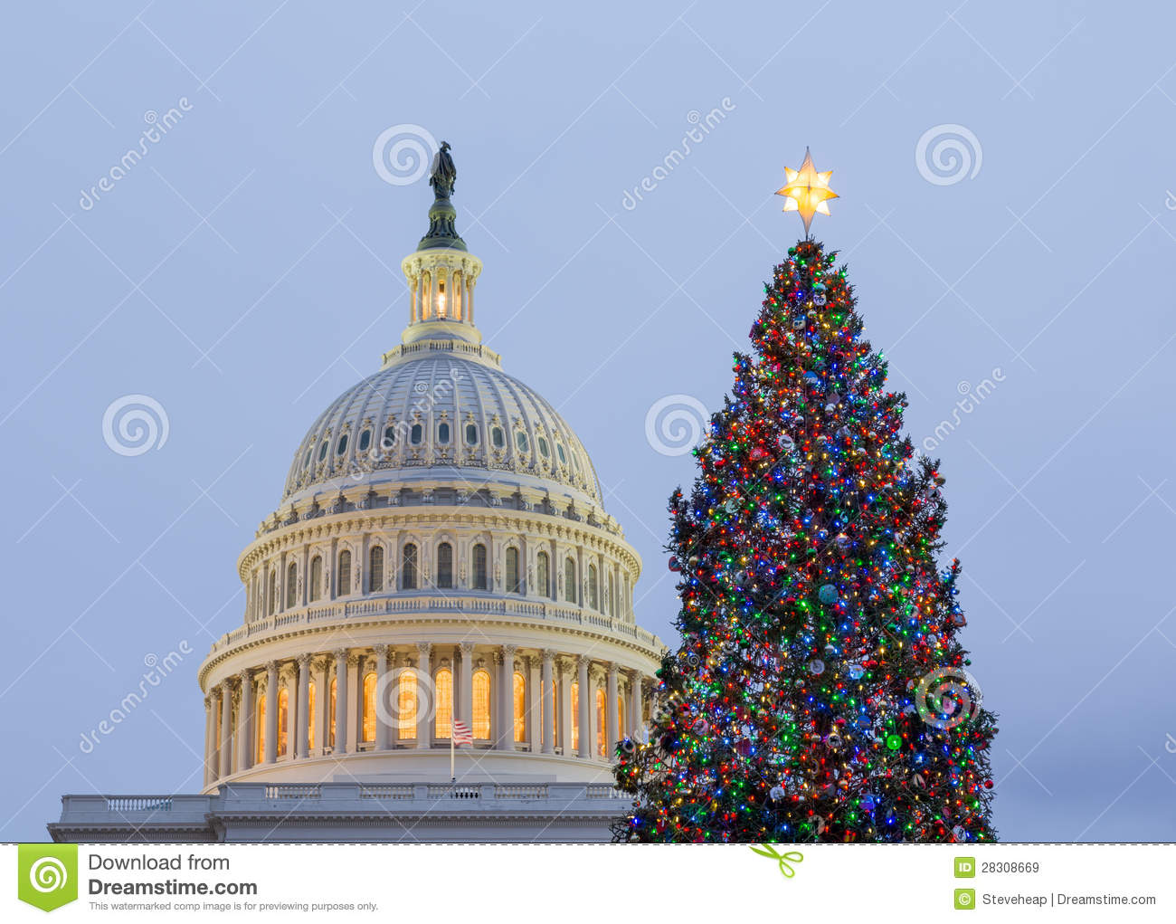 Christmas Tree In Front Of Capitol Washington DC Royalty ...