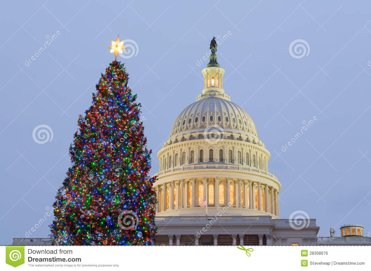 Christmas Tree In Front Of Capitol Washington Dc Royalty