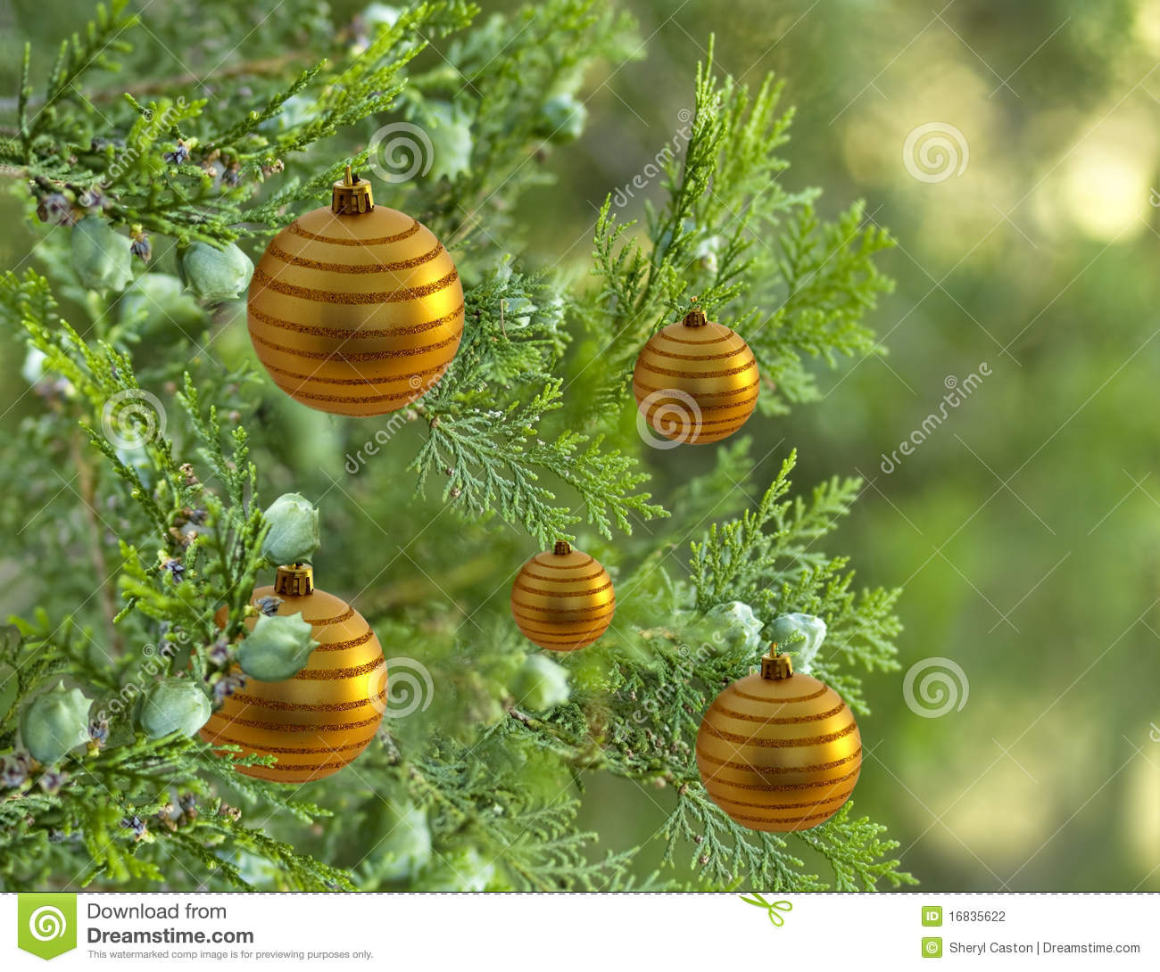 Christmas tree with gold bauble balls decorations stock