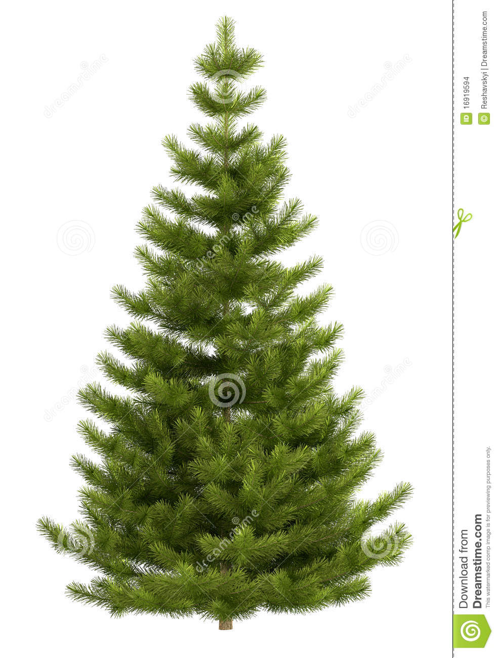 Delightful Christmas Tree Without Lights Part - 5: Christmas Fir Isolated Tree ...