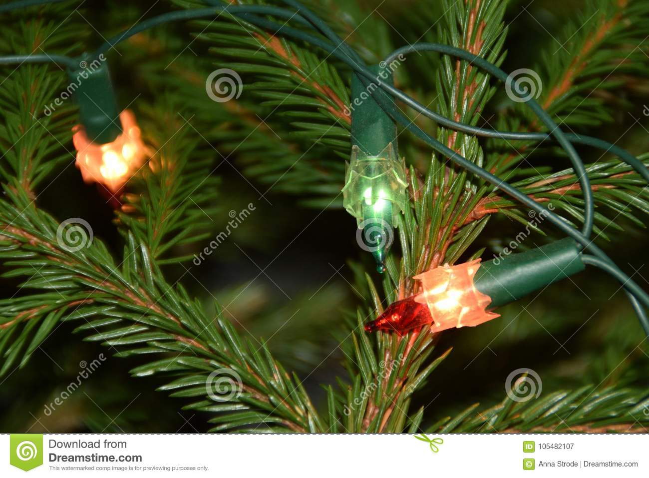 Christmas Tree Lights On Fir Tree Branches. Stock Image - Image of ...