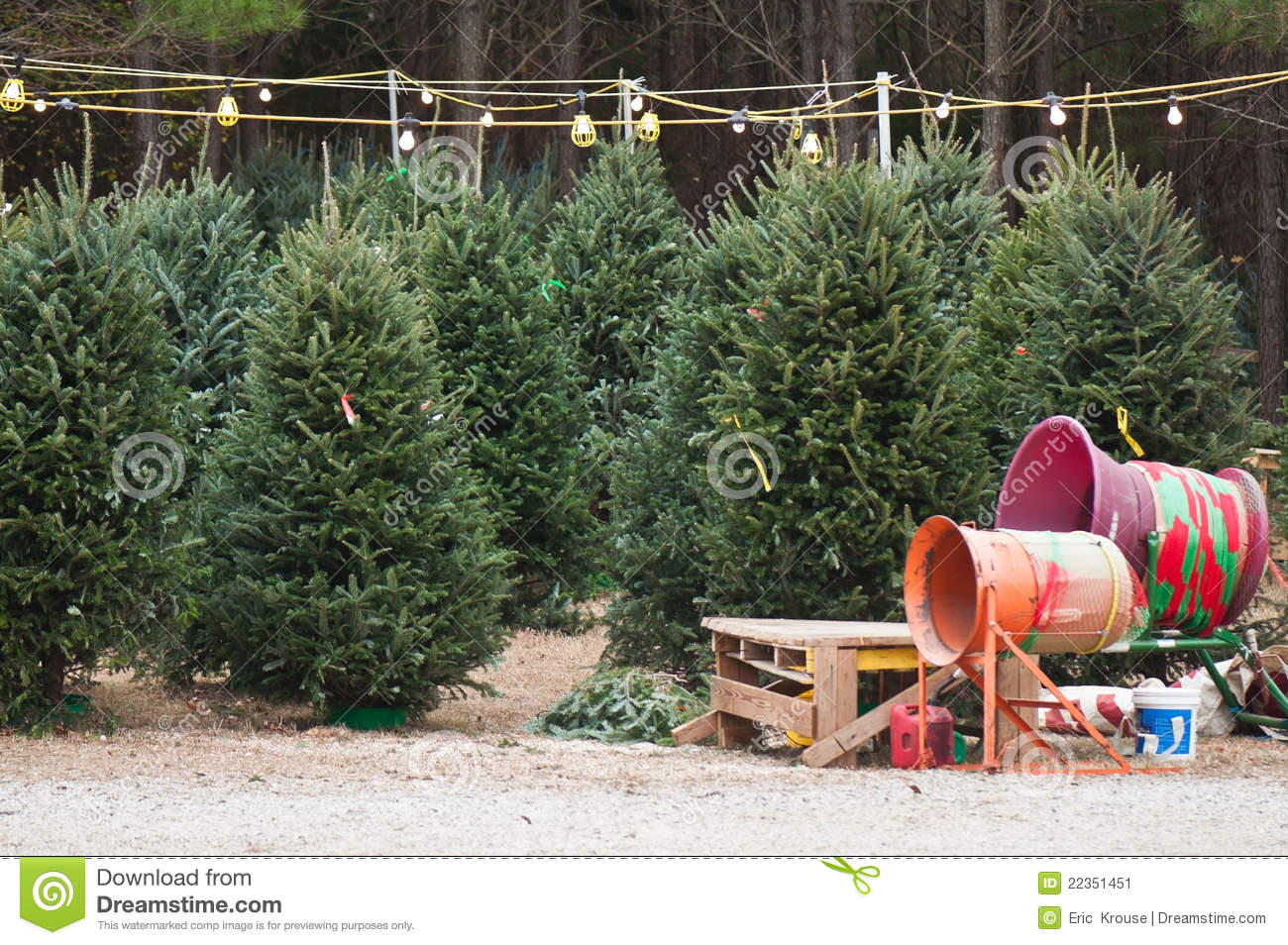 Christmas tree lot stock image of