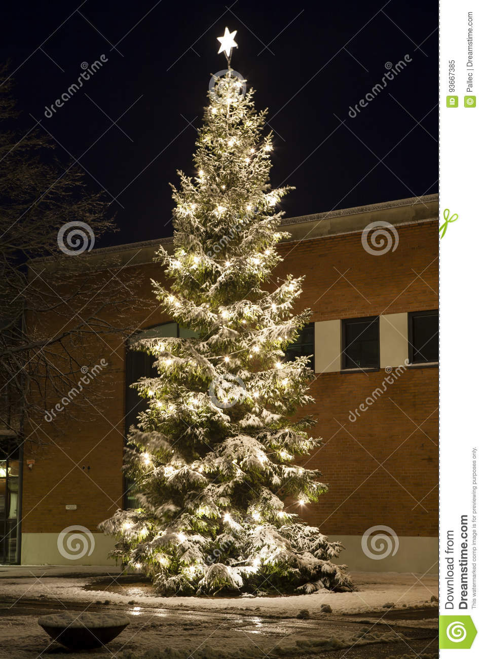 Christmas Tree Outside.Christmas Tree Outside With Snow And Lights Stock Image