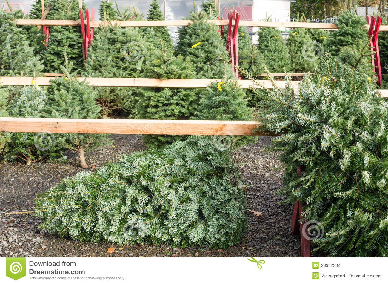 royalty free stock photo download christmas tree sales - Sales On Christmas Trees