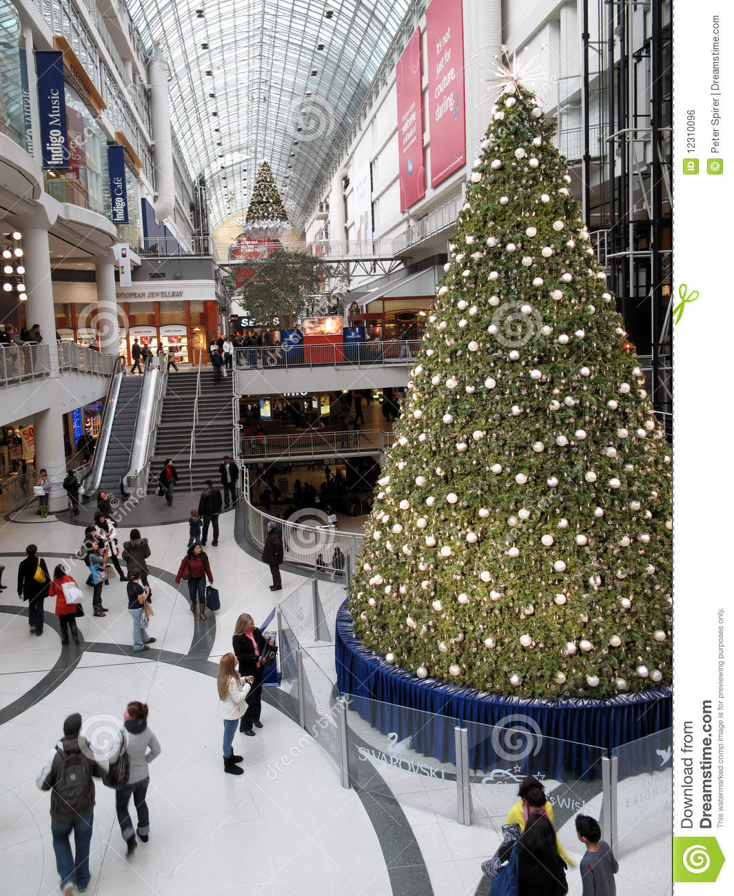 Best 28 Shopping For Christmas Tree Christmas Tree At
