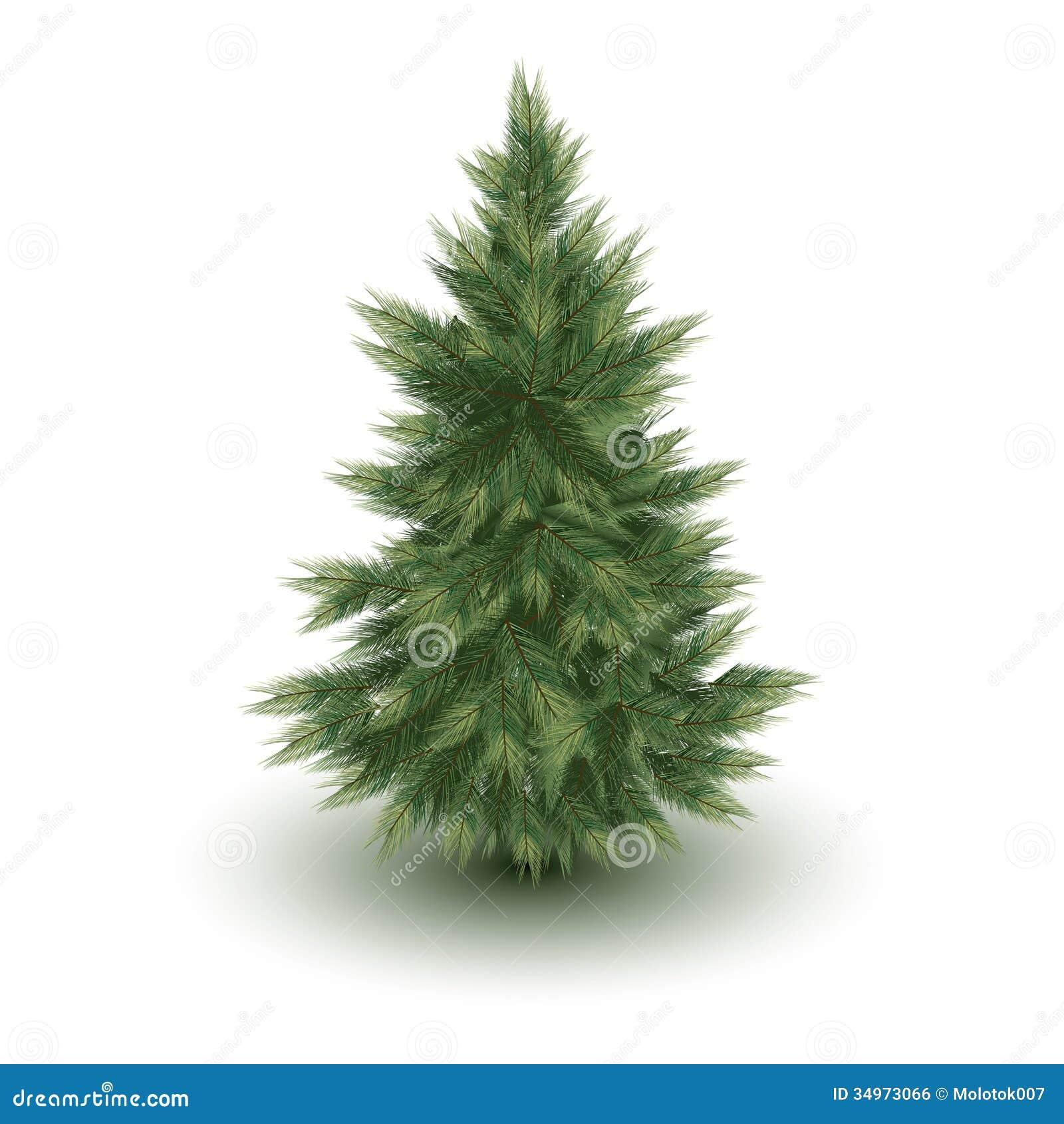 Christmas tree vector image royalty free stock image image 34973066 - Royalty Free Stock Photo Christmas Pine Tree Vector