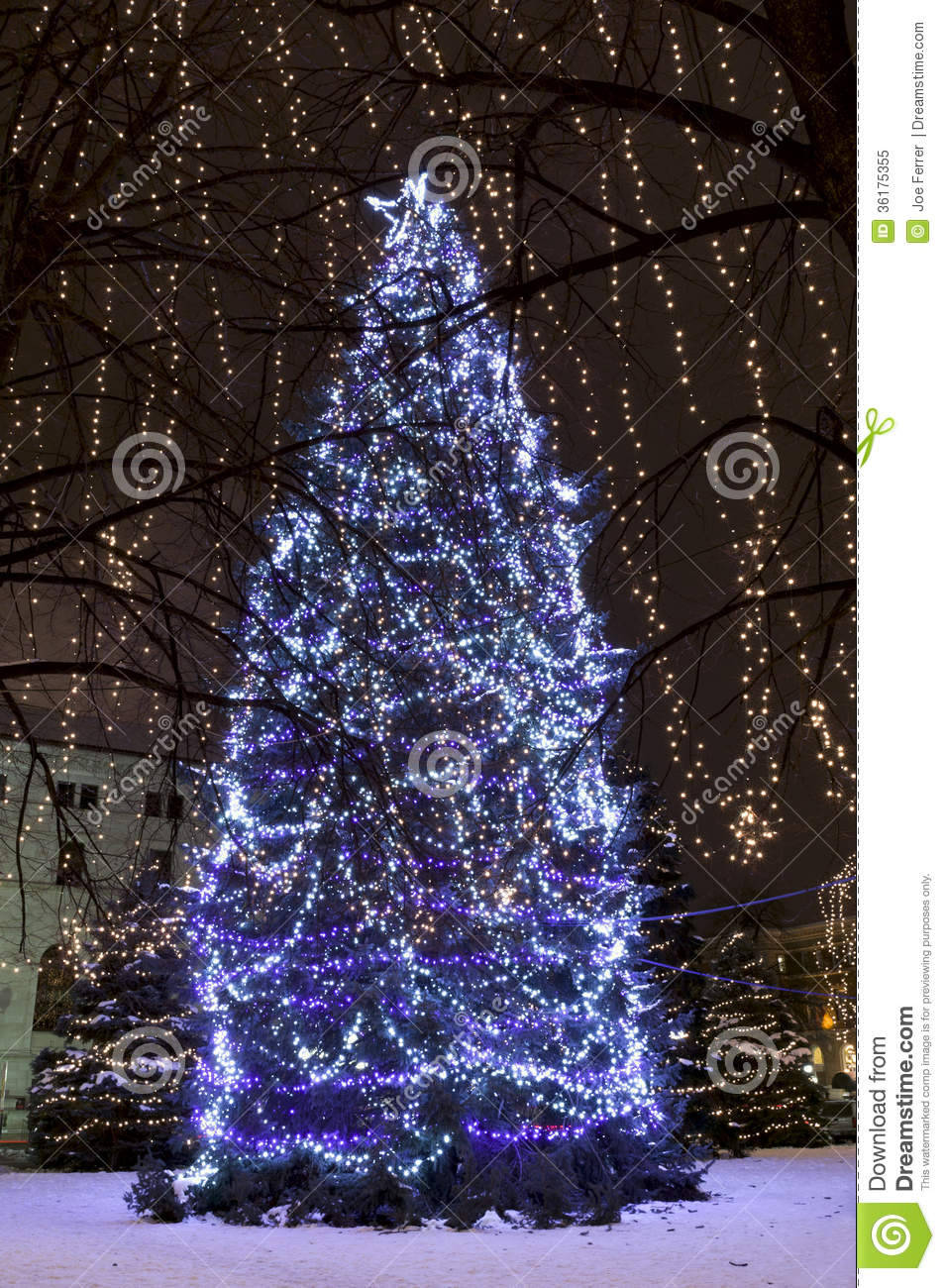 Christmas Trees Illuminated At Rice Park Stock Image ...