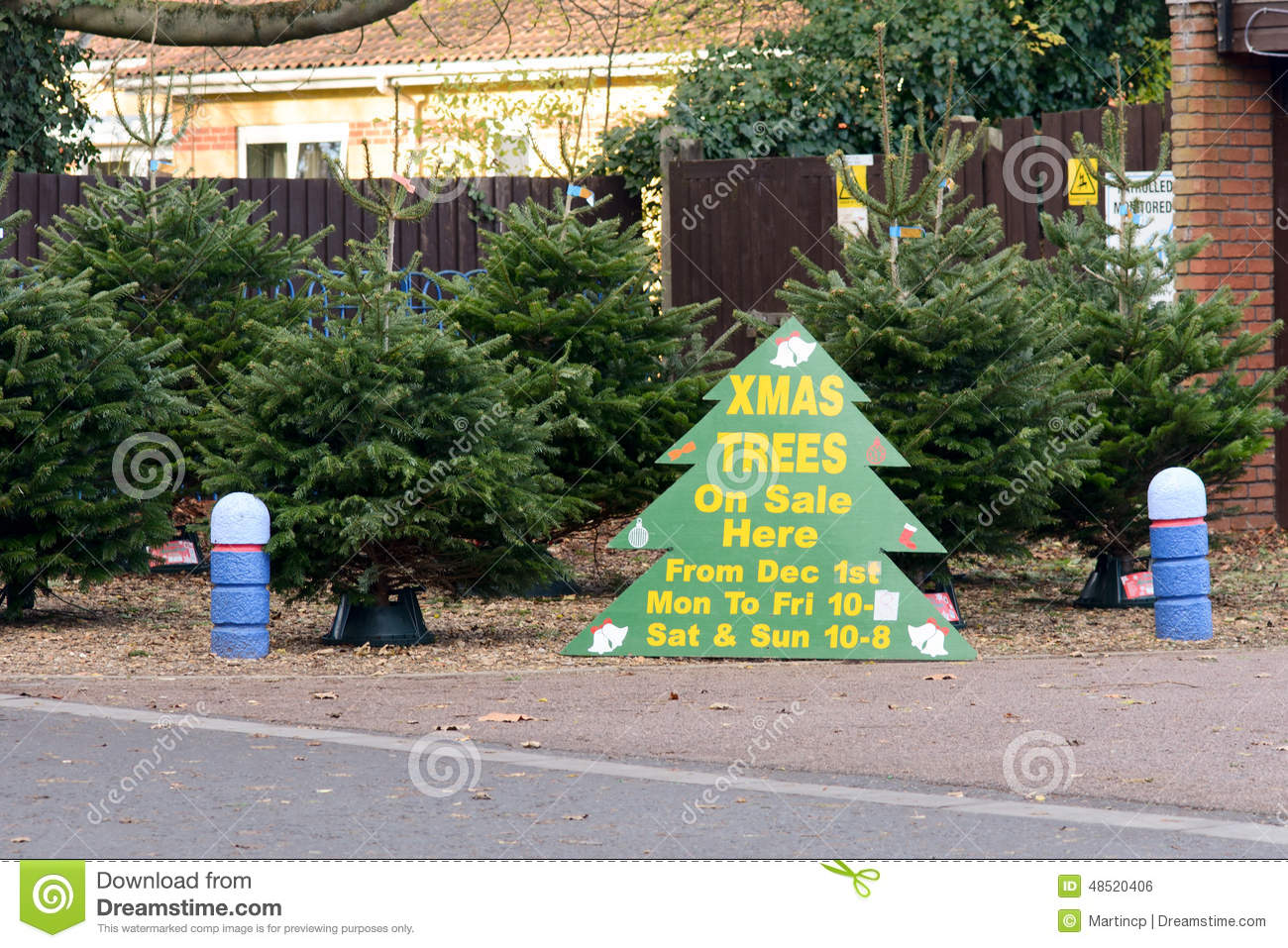 Christmas Trees For Sale Sign Stock Photo Image Of Festive Colour