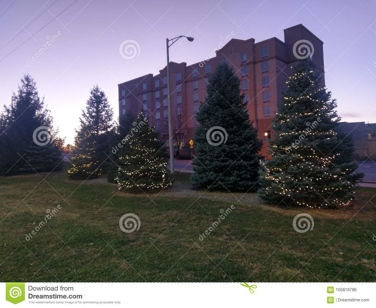 Christmas trees at sunset in West Lafayette Indiana