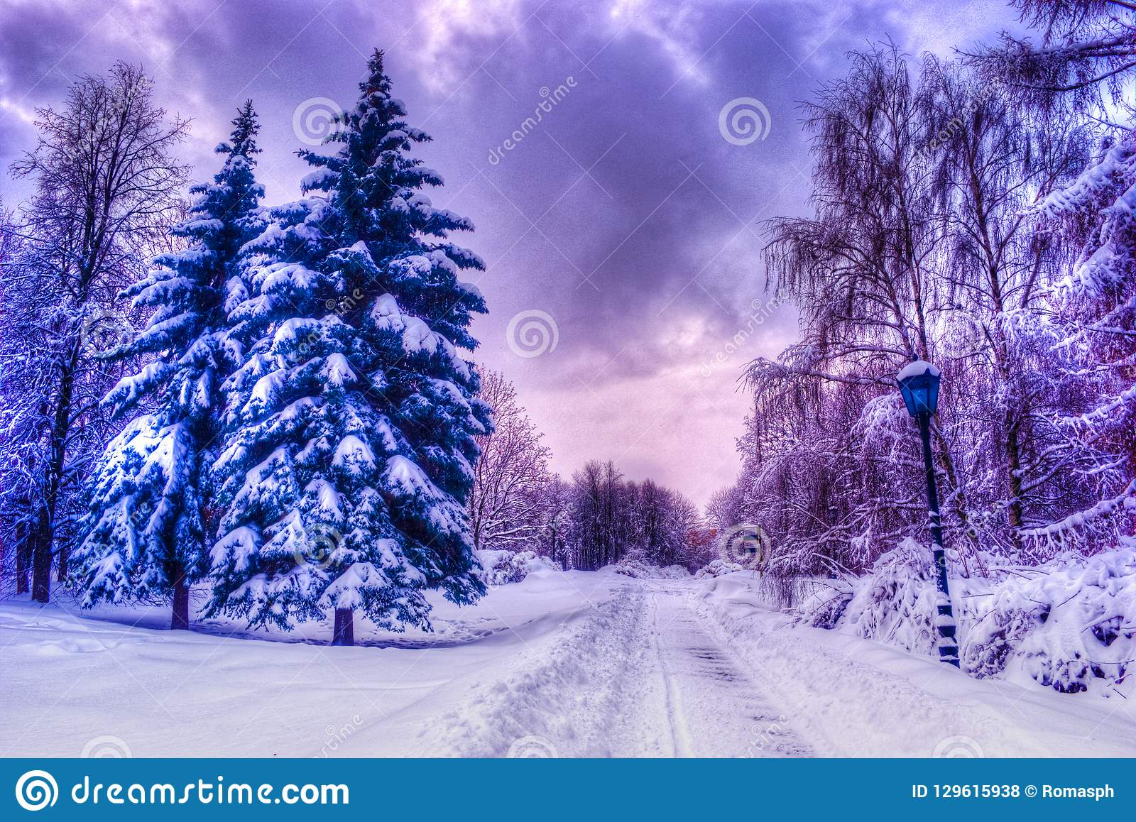 Christmas winter landscape, spruce and pine trees covered in snow