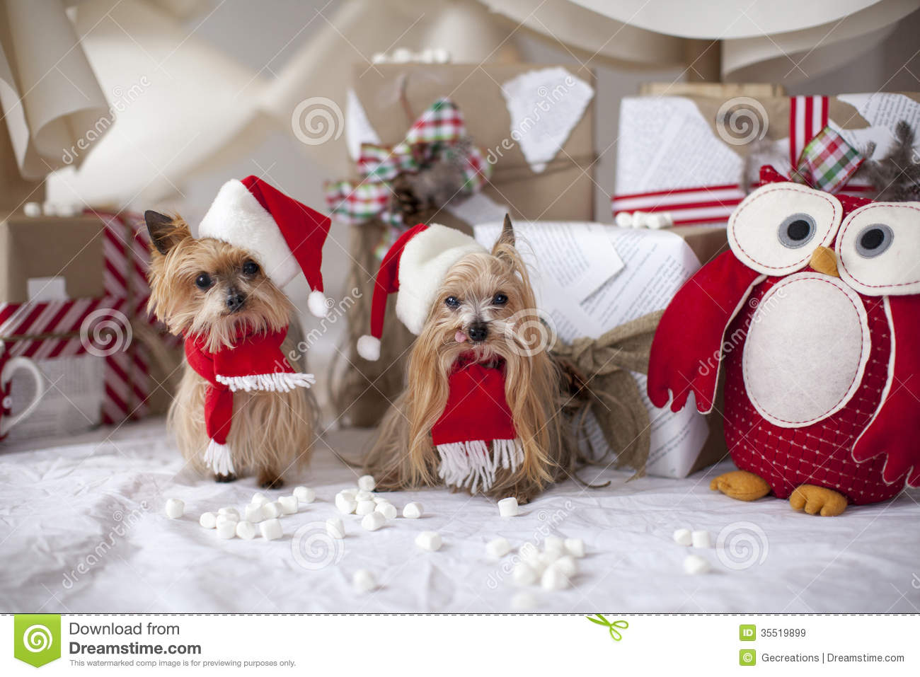 Christmas Yorkshire Terrier Dogs Royalty Free Stock Images ...