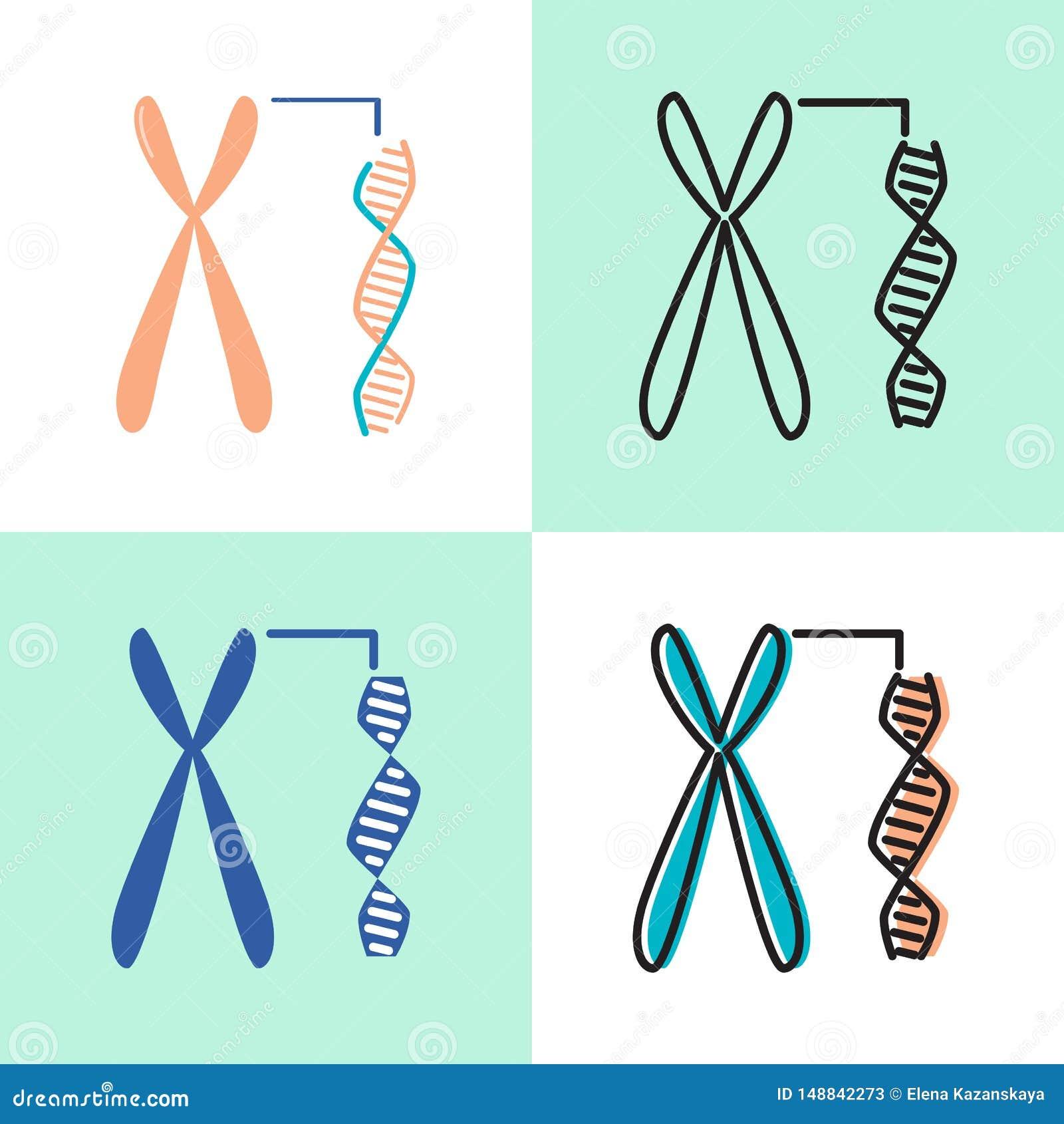 Chromosom- und DNA-Spiralenikone eingestellt in Ebene und in Linie Art