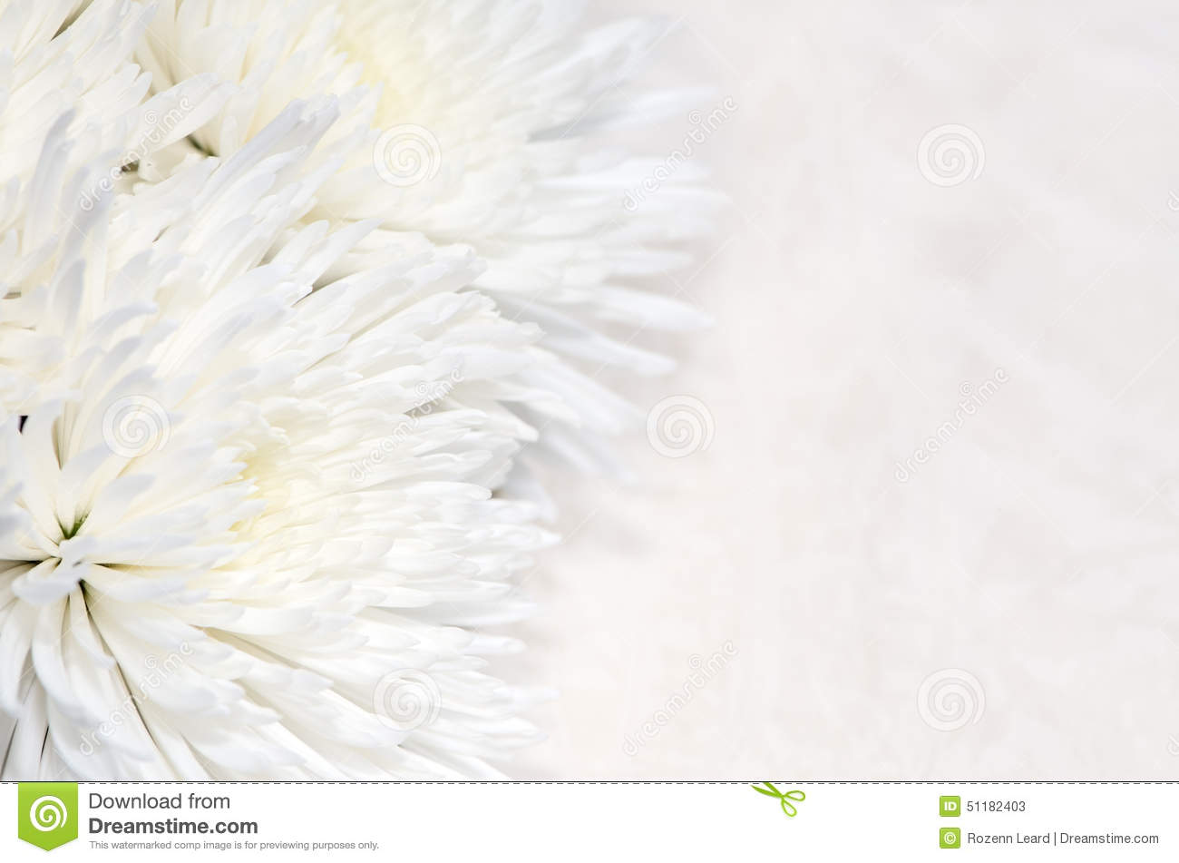 Chrysanthemum Background  Funeral Program Background
