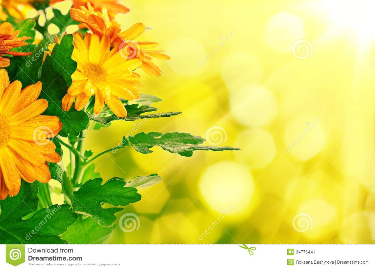 Chrysanthemum Floral Background Stock Image Image Of Fall