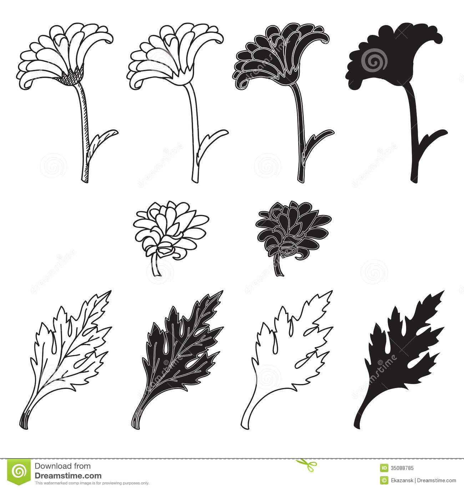 Хризантемы рисунок