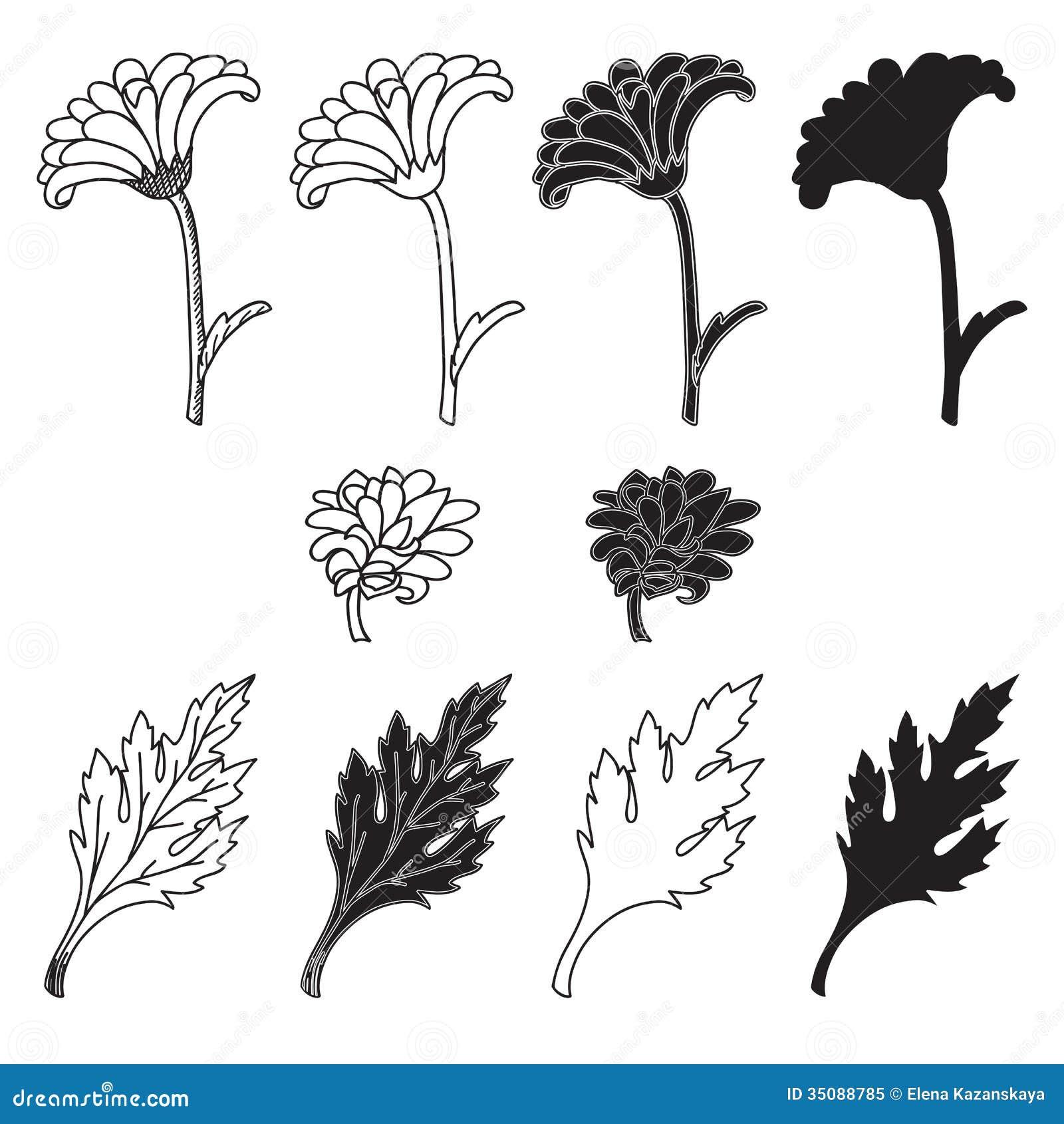 Chrysanthemum Flower Line Drawing : Chrysanthemum flowers and leaves stock vector