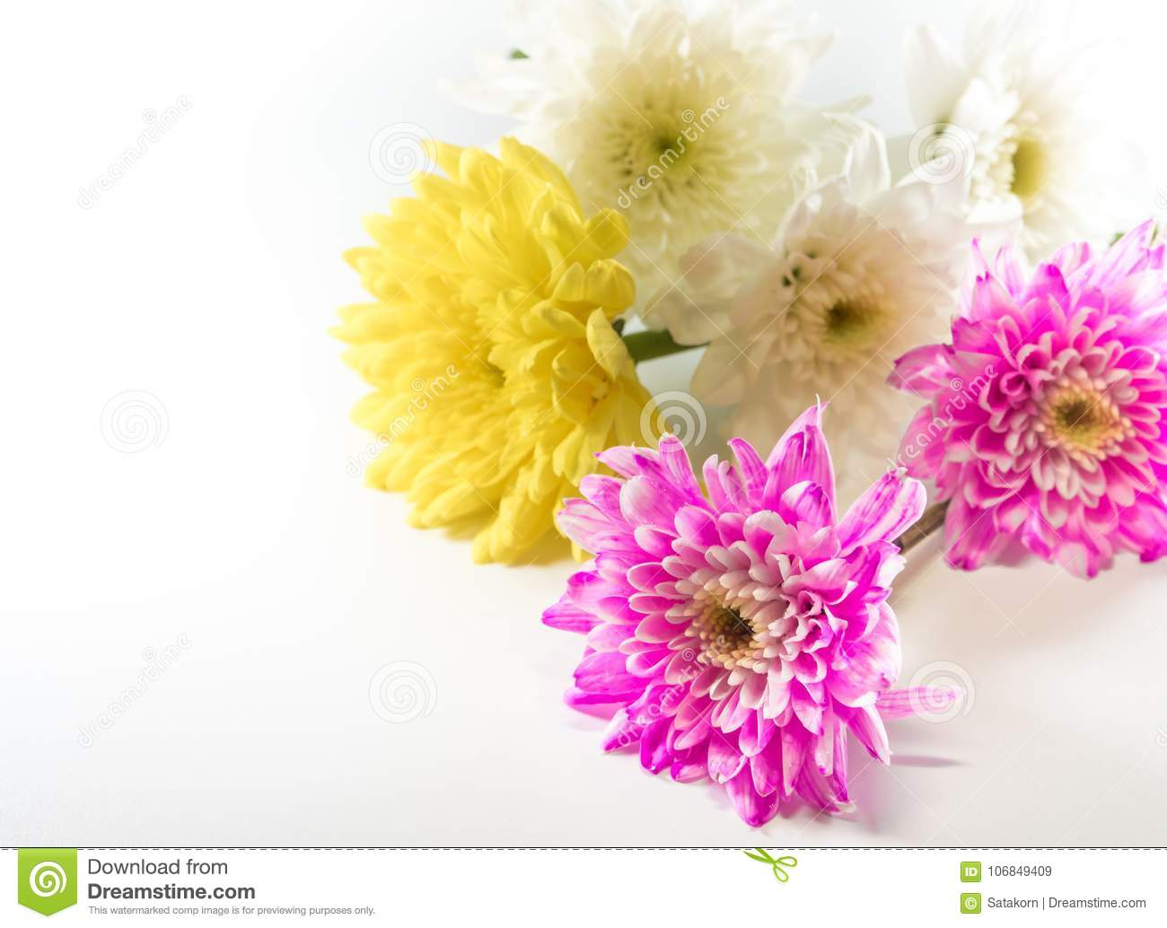 Chrysanthemum Pink Yellow And White In Flower Bouquet Stock Image