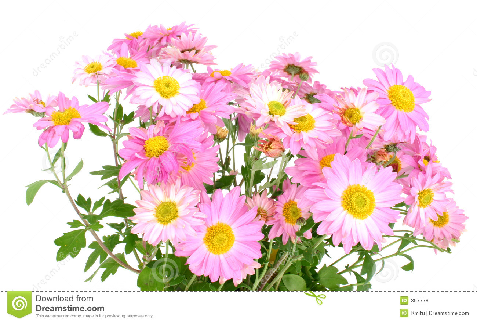 Chrysanthemums sur #2 blanc