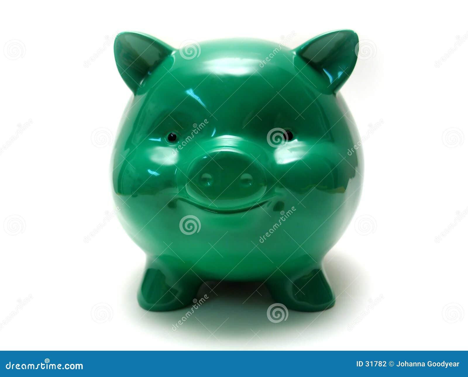 Chubby świnka