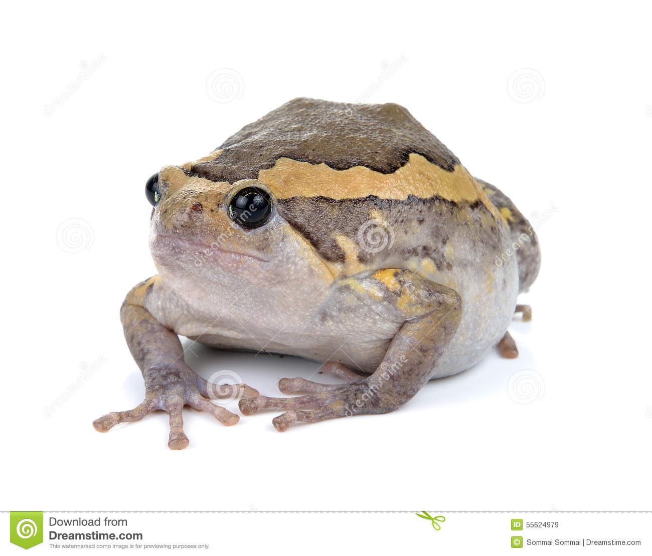 frog picture Chubby