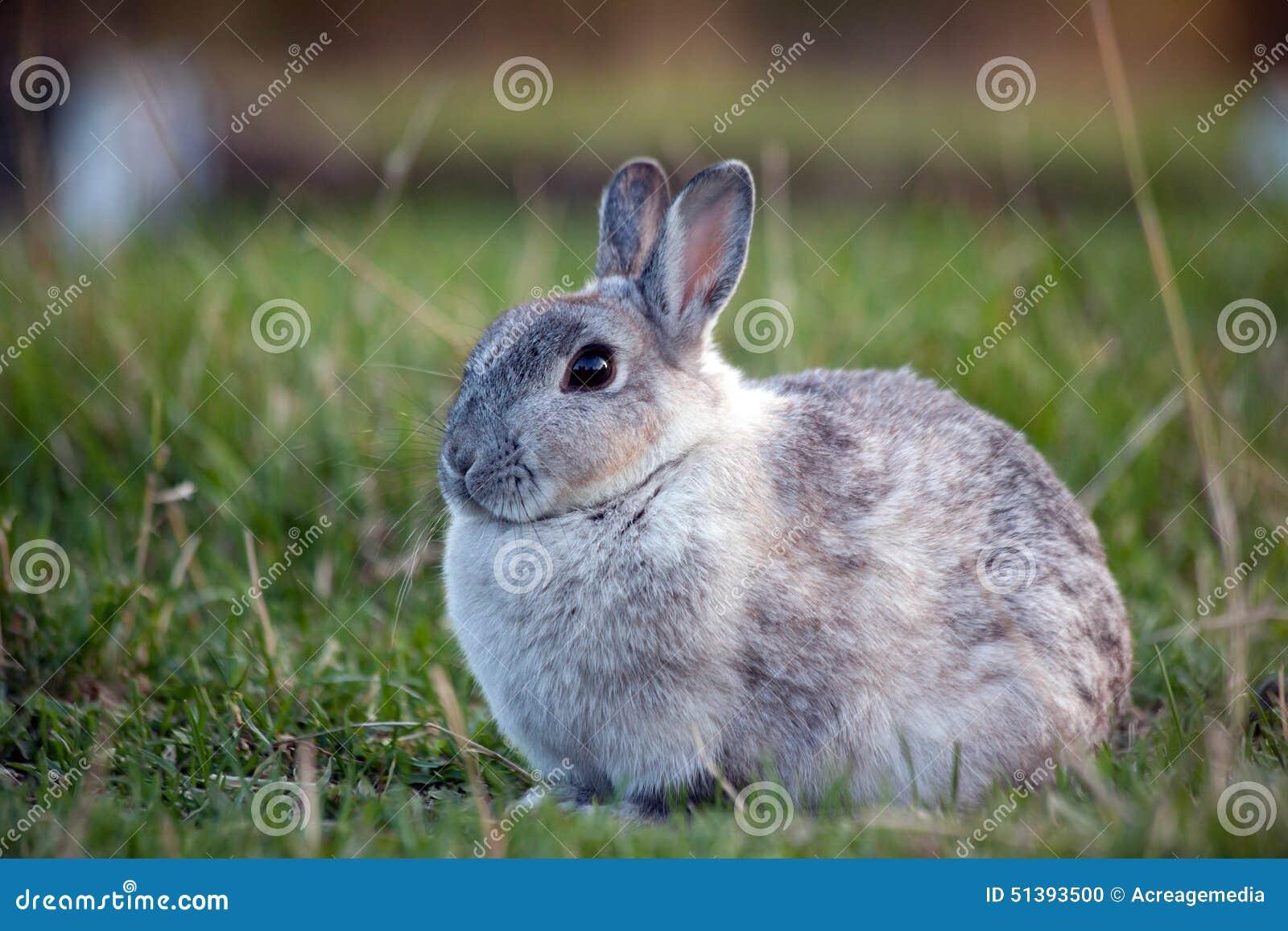 Bbw rabbit