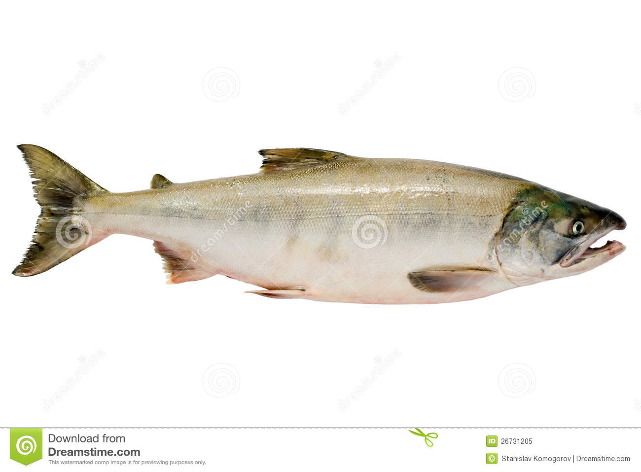 Why is sockeye salmon different from chum salmon Im interested in food quality