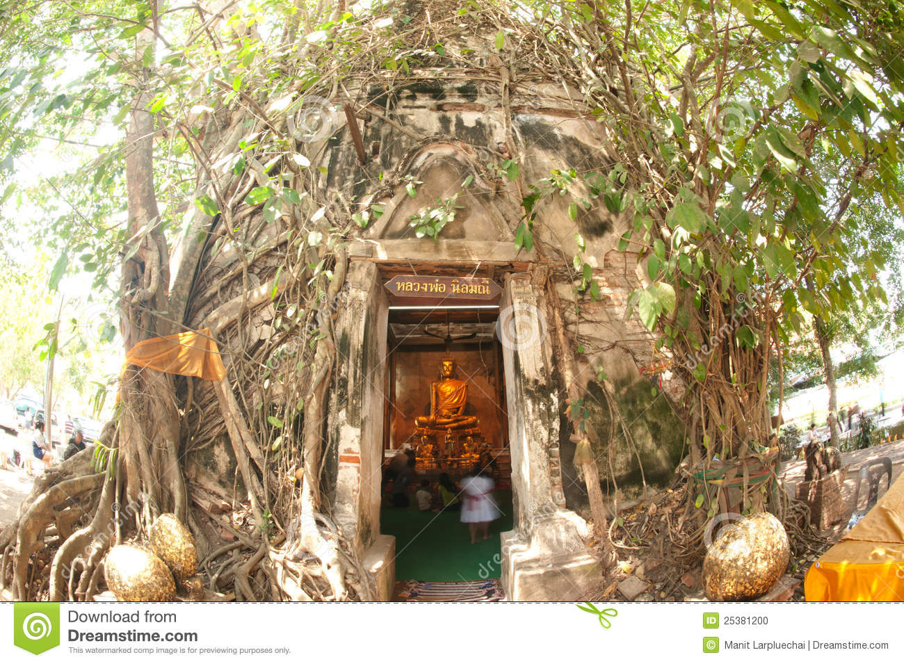Church covered up the roots,Thailand.