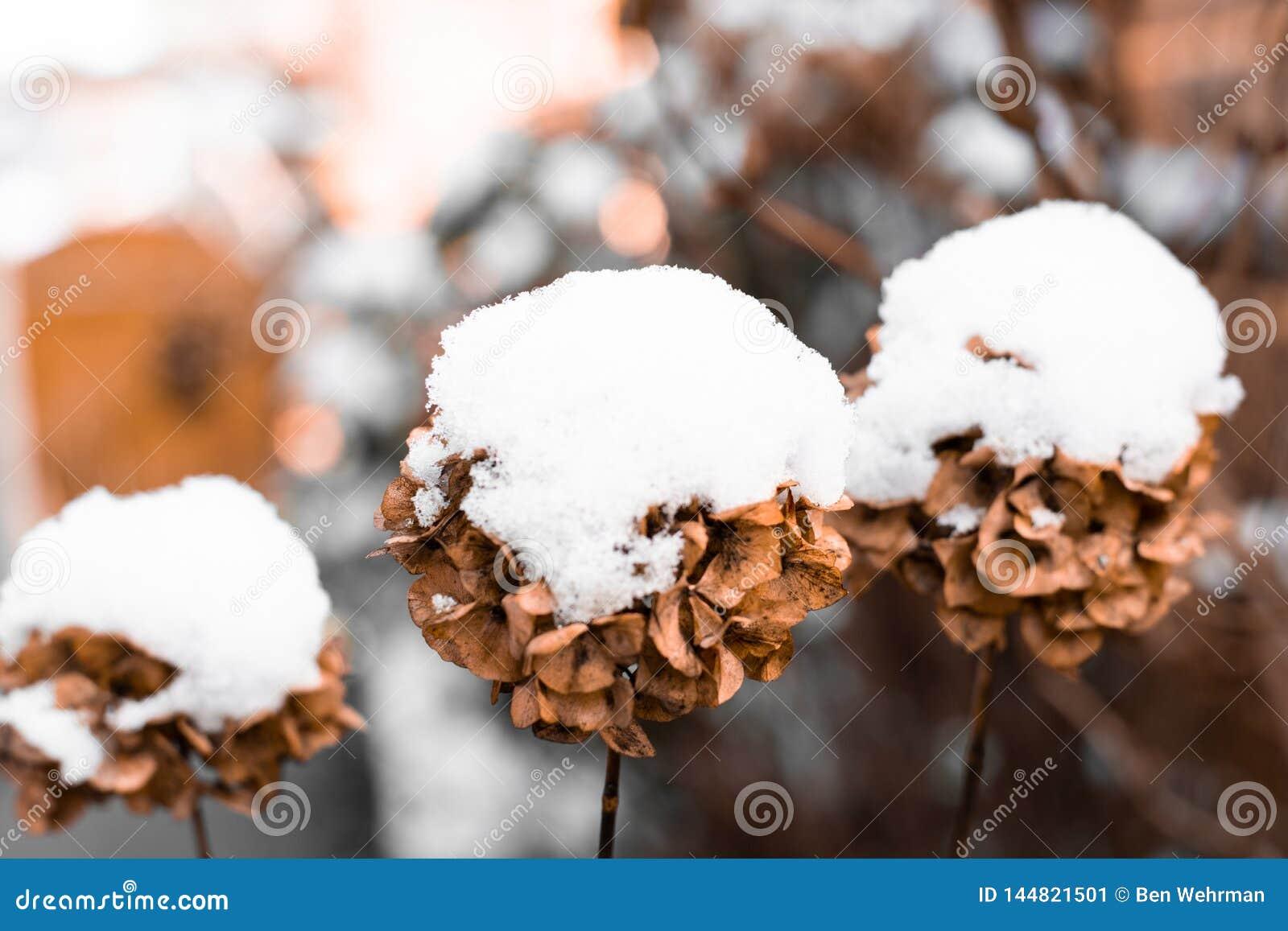 Chutes de neige dans un jardin