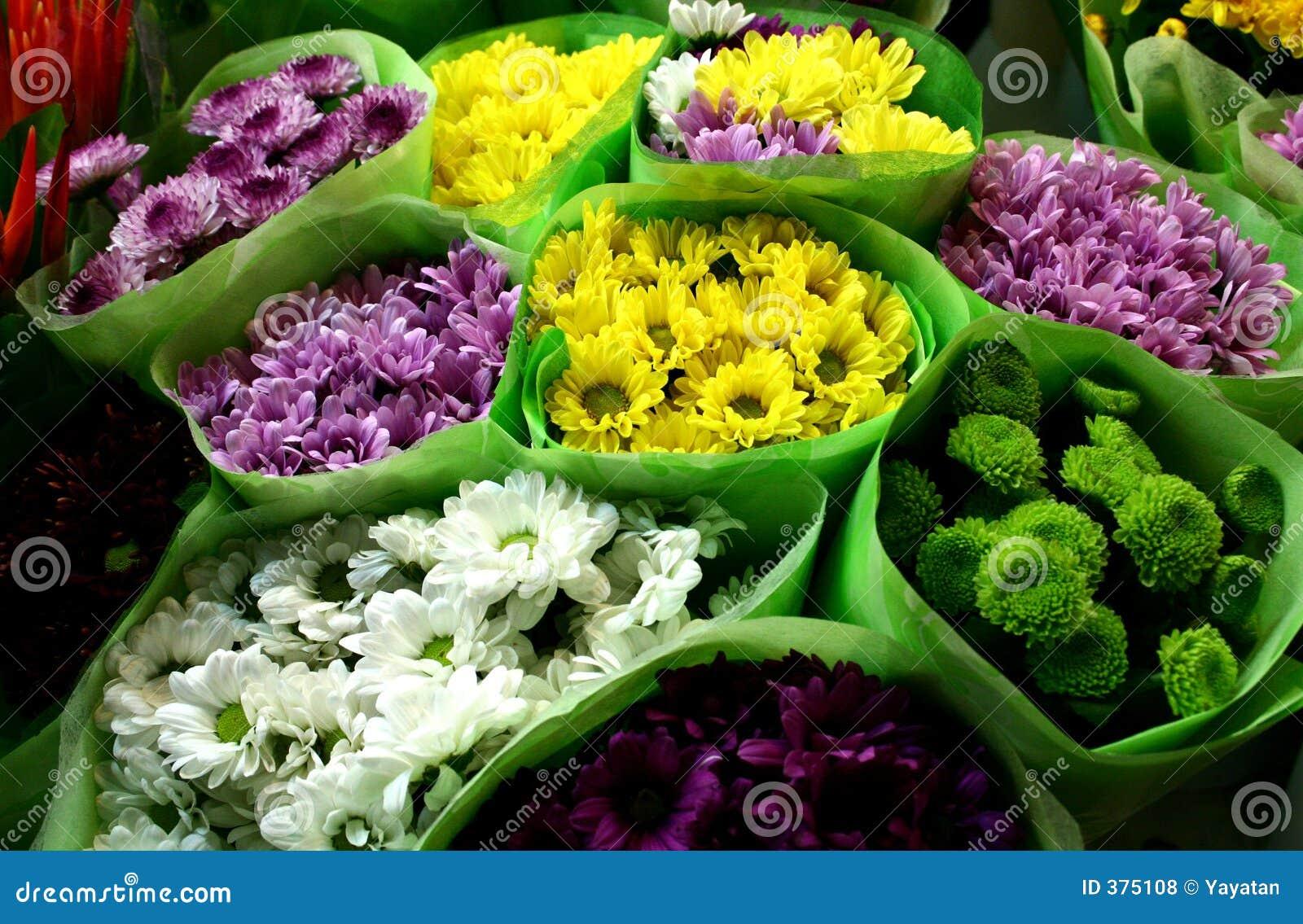 Chysanthemum para a venda
