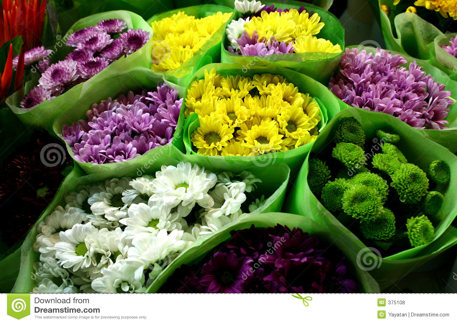 Chysanthemumförsäljning
