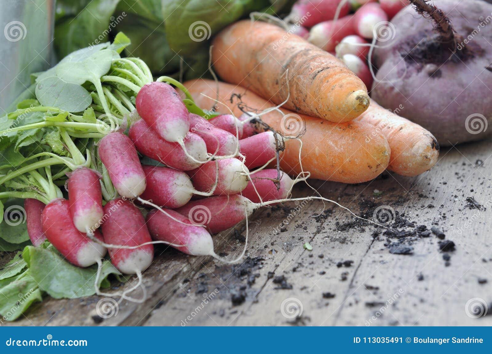Ciérrese en verduras frescas del jardín