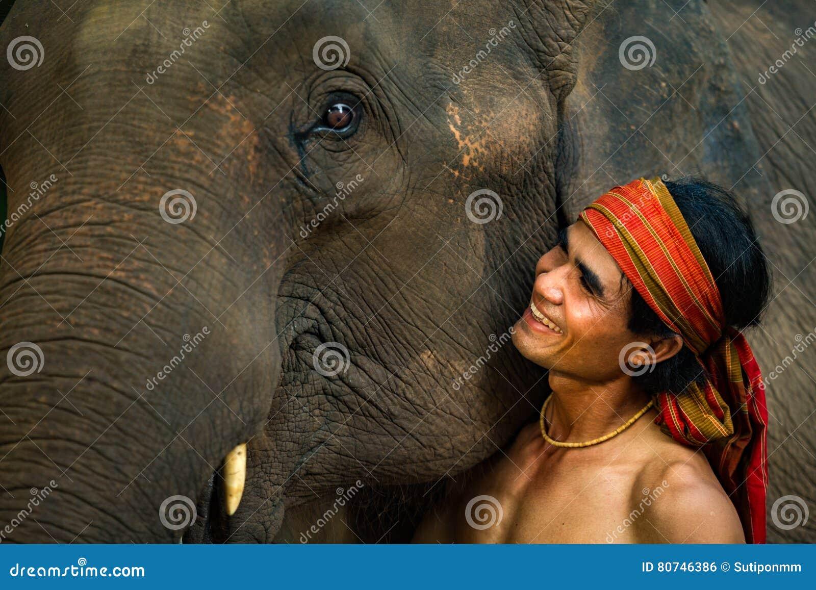 Ciérrese encima de elefante de la cara