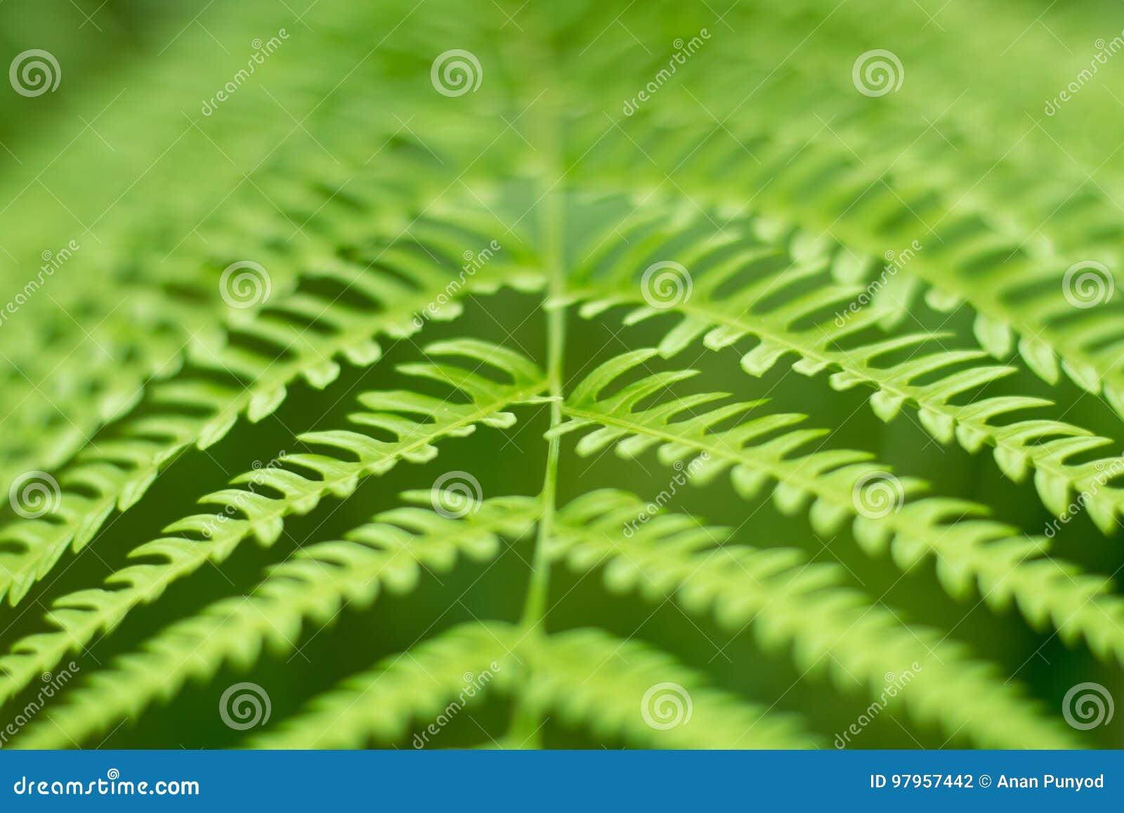 Ciérrese encima de fondo verde del extracto de la naturaleza de la hoja del helecho