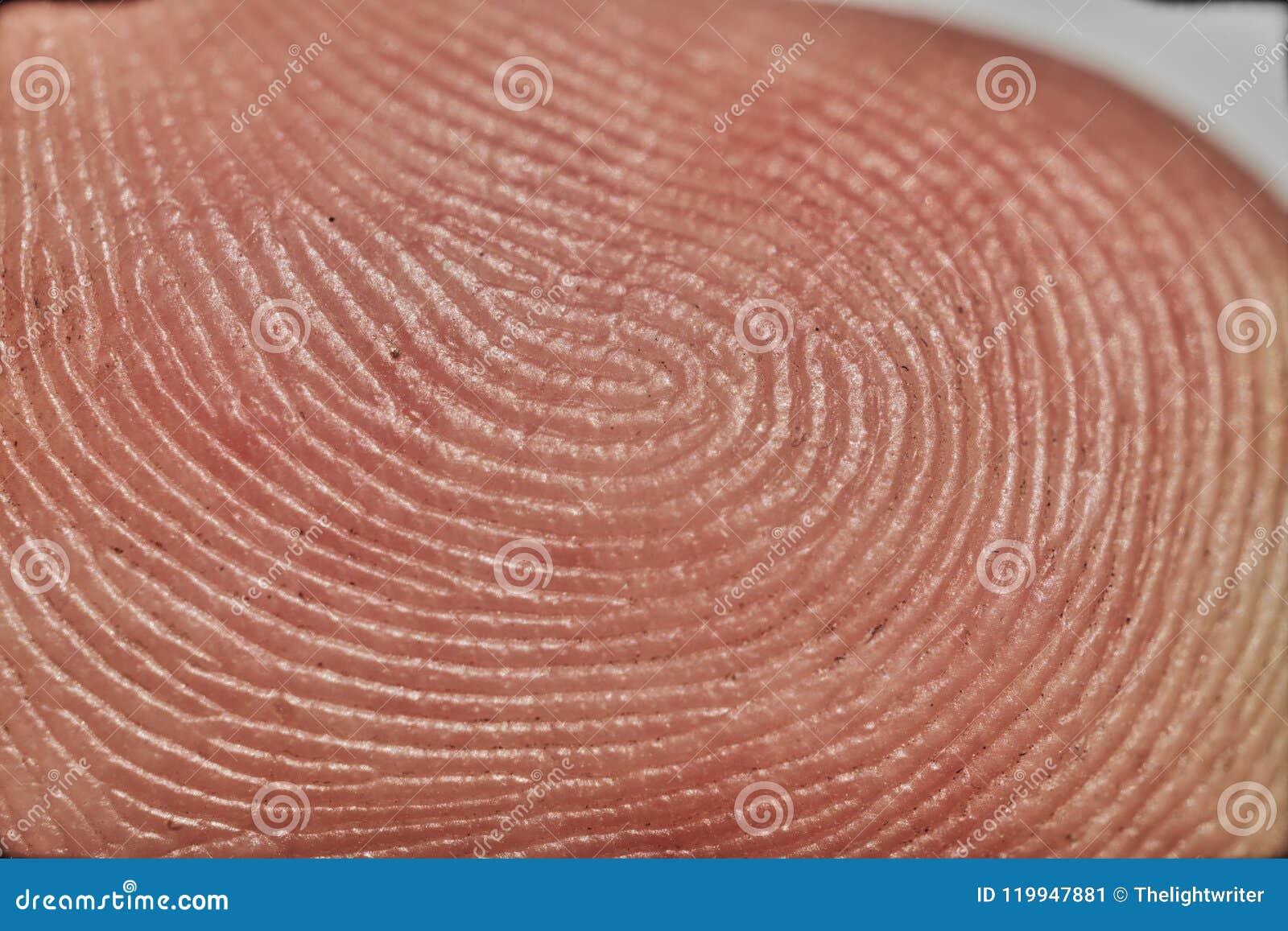 Ciérrese encima de imagen macra de un finger humano