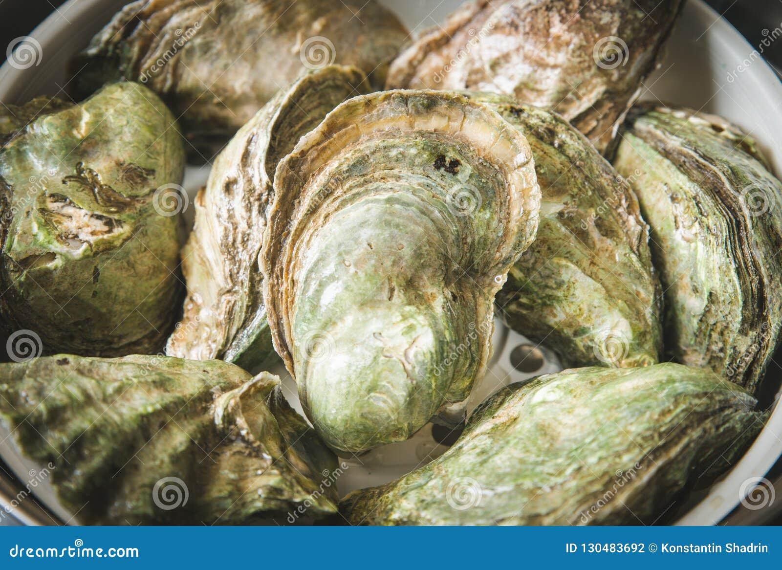 Ciérrese encima de la captura fresca de varias ostras crudas en la exhibición al por menor del mercado del pescador, cierre para