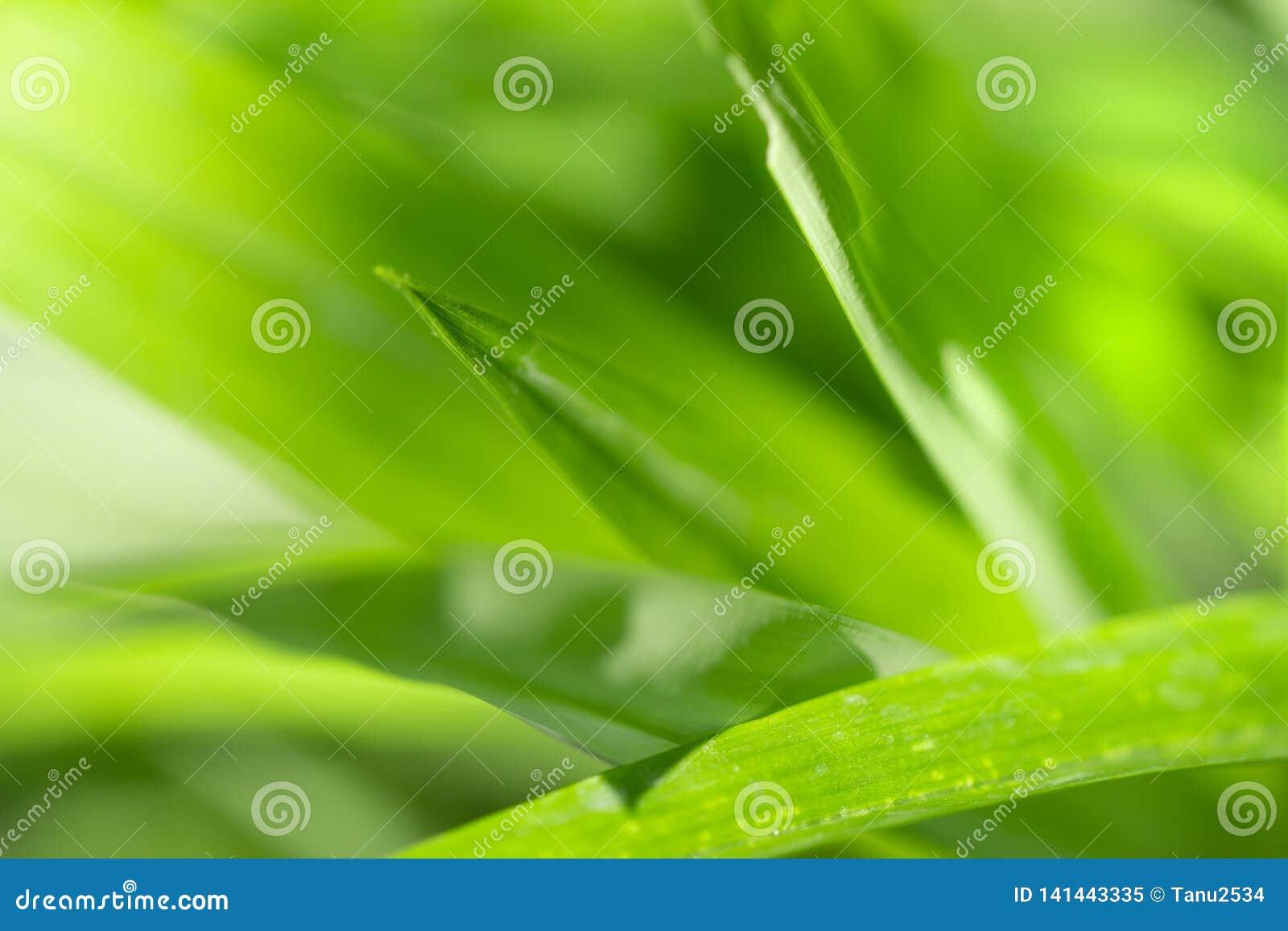 Ciérrese encima de la opinión de la naturaleza de la hoja verde