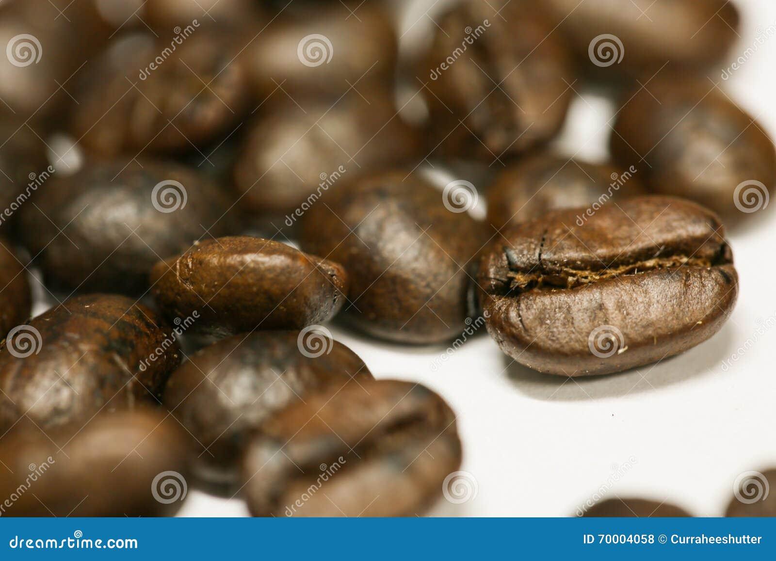 Ciérrese encima de los granos de café frescos y aislado en el fondo blanco, el material fresco del mercado, la bebida sana y la b