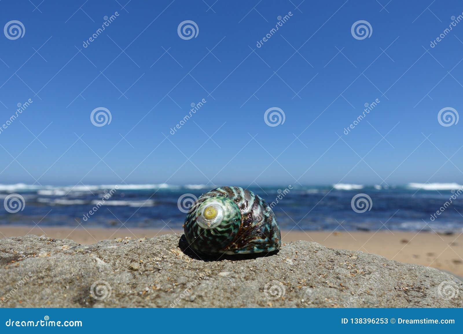 Ciérrese encima de mostrar la cáscara en la playa a lo largo del gran camino del océano, Australia