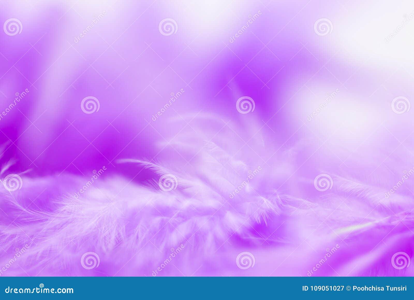 Ciérrese encima de pluma púrpura Uso de la imagen para la textura del fondo, extracto, ala del animal