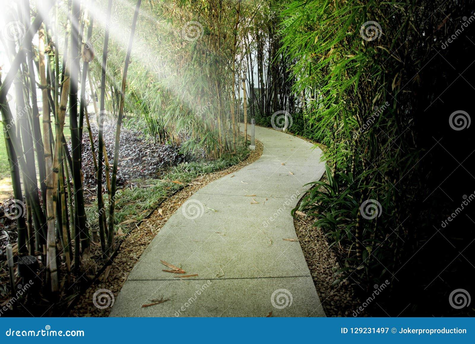 Ciérrese encima del sendero vacío en parque público y el haz de luz en la explosión