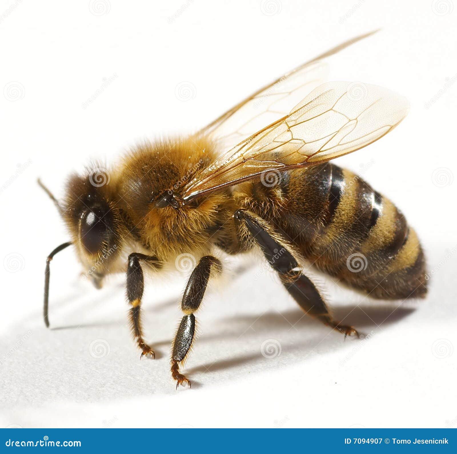Ciérrese para arriba de abeja