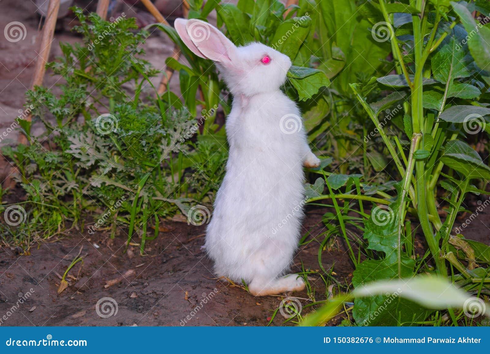 Ciérrese para arriba de conejo blanco hermoso en un jardín